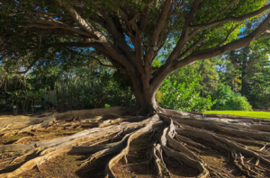 image of tree with roots - parityfactory software