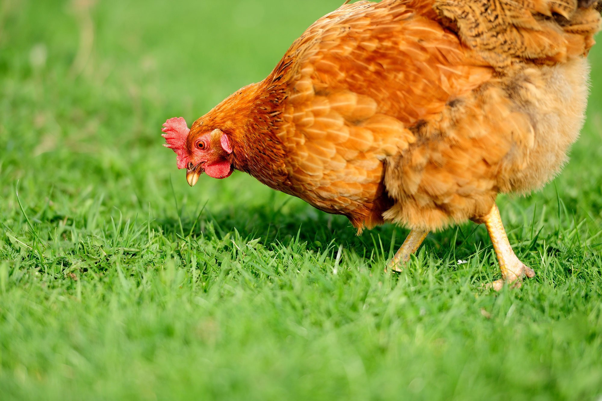 ParityFactory helps the poultry industry